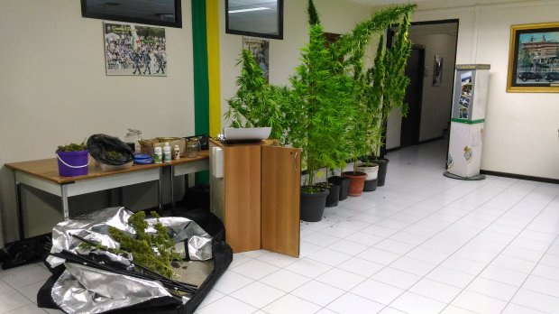 Guardia di Finanza Avellino. Sequestrata marijuana
