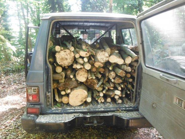 Furto di legna nel Parco Regionale del Partenio, i Carabinierli Forestali arrestano un pluripregiudicato