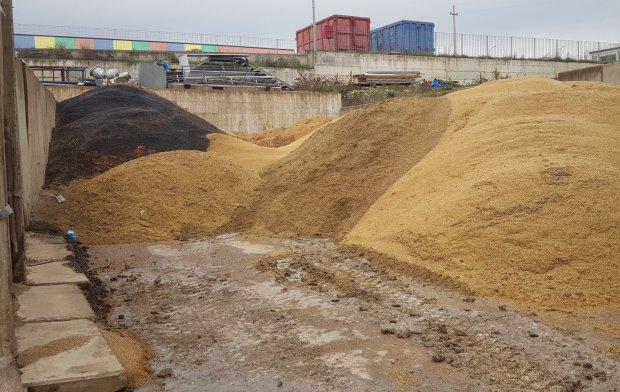 Il piazzale dell'Agrisemi Minicozzi pieno di grano e semi andati a male