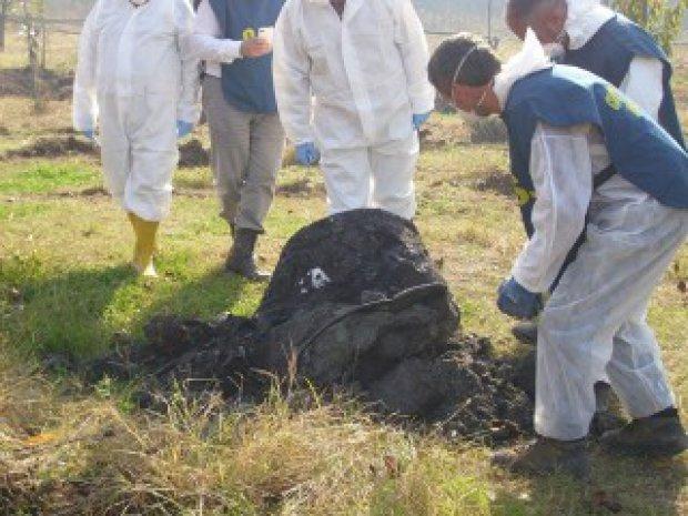Rapporto Ecomafia, la Calabria registra lieve calo di illeciti ambientali