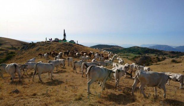 Mucche e trivella, Morcone
