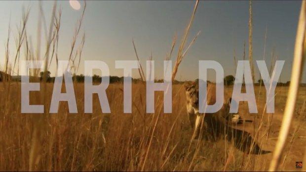 Giornata della Terra con i leoni