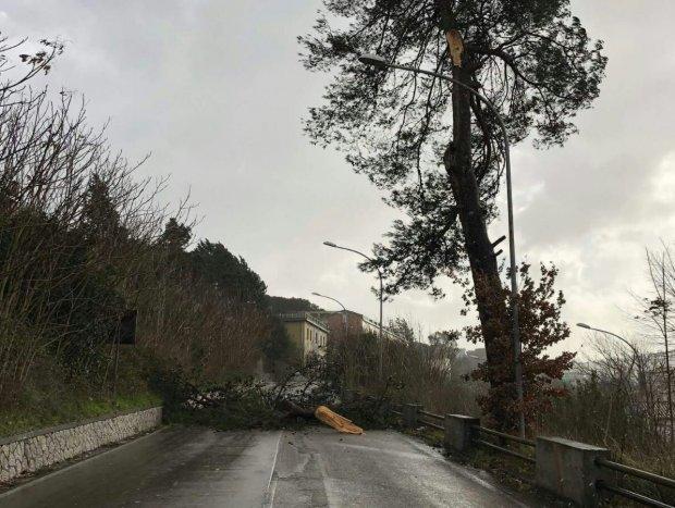 Via Santeramo: caduto un albero per il forte vento, nessun ferito