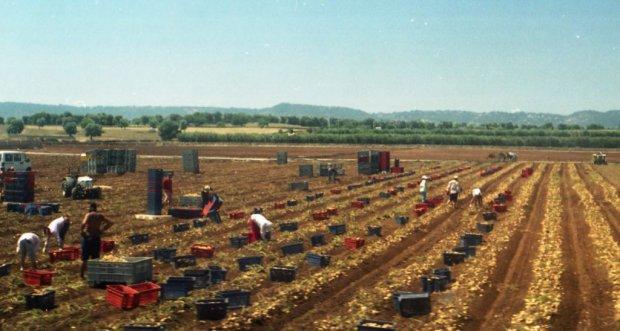 Lavoro nei campi pomodori foto: Osservatorio Diritti