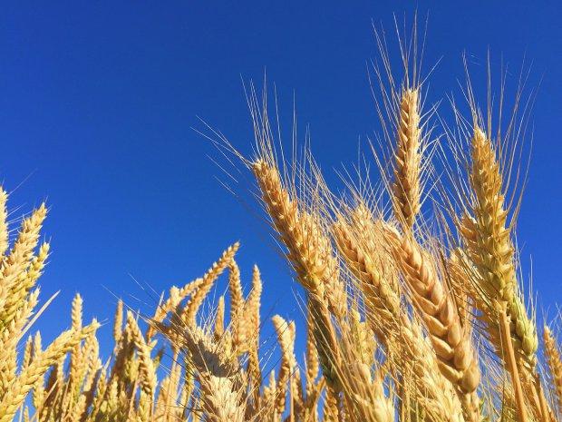 Colture agricole