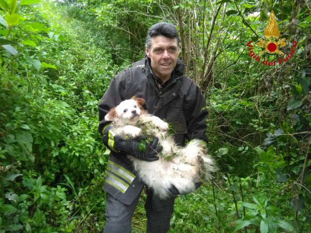 Salvataggio cane a Pannarano