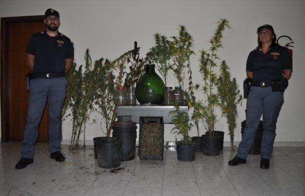 La marijuanasequestrata dalla Polizia