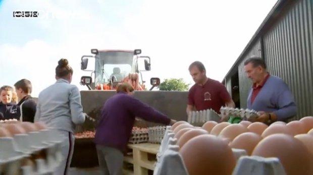 Fipronil: uova sarde sicure Ma attenti all'etichetta