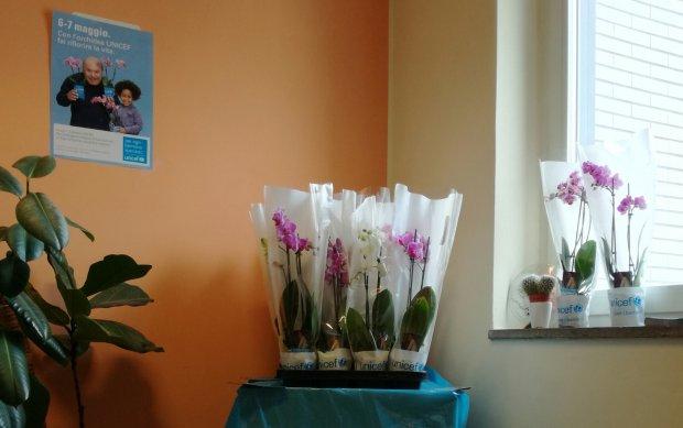 Arriva anche a Polignano a Mare l'orchidea Unicef per i bambini
