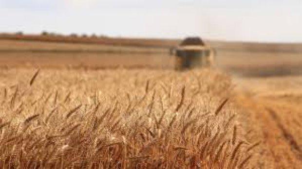 fitorfarmaci in agricoltura