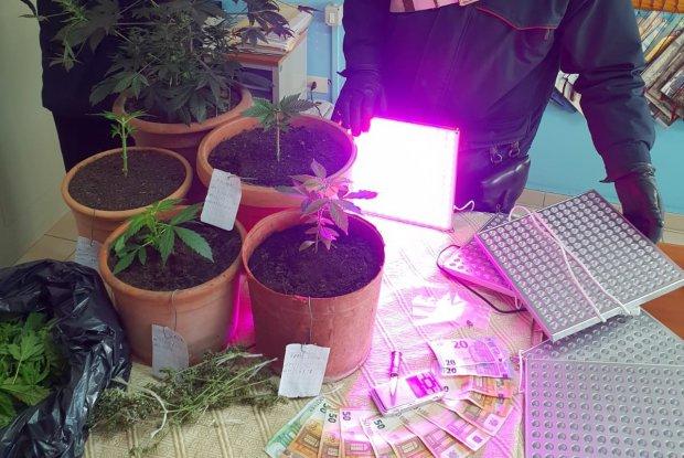 Marijuana e soldi