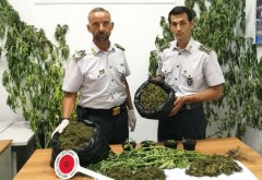Guardia di Finanza Caserta, marijuana sequestrata