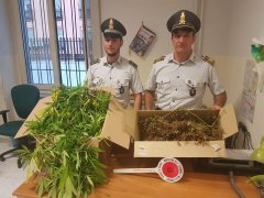 Marijuana sequestrata dalla Guardia di Finanza di Napoli