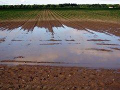 Alluvione campi