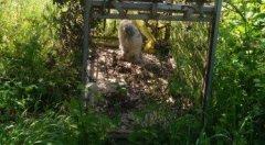 I Carabinieri forestali sequestrano trappola per fauna selvatica