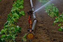 Agricoltura 2015