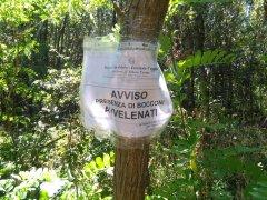 Esche avvelenate scoperti dai Carabinieri Forestali