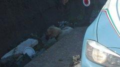 Foto cane salvato