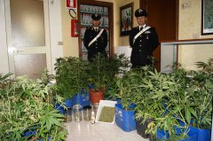 Colle Sannita, scoperta coltivazione di marijuana. Denunciate dai Carabinieri due persone