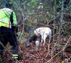 Trovato il corpo del pensionato 80enne scomparso a Baselice