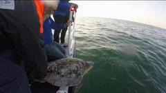 La Guardia costiera libera in mare, a Pescara, sette tartarughe