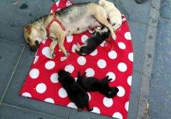 Accattonaggio. Cani messi in salvo dai volontari dell'Enpa di Benevento