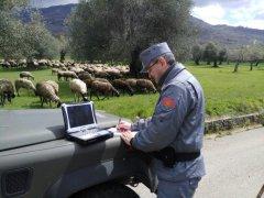 Controlli dei Carabinieri Forestali su filiera ovina