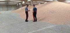 Sequestrati 45.000 Quintali di grano dai Carabinieri Forestale di Benevento