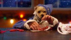 Cani e gatti aiutanti di Babbo Natale: sono loro a preparare i nostri doni
