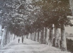Airola, viale Moiano nel 1920