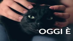 8 agosto: la giornata mondiale del gatto