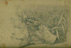 Disegno del Maestro Achille Vianelli